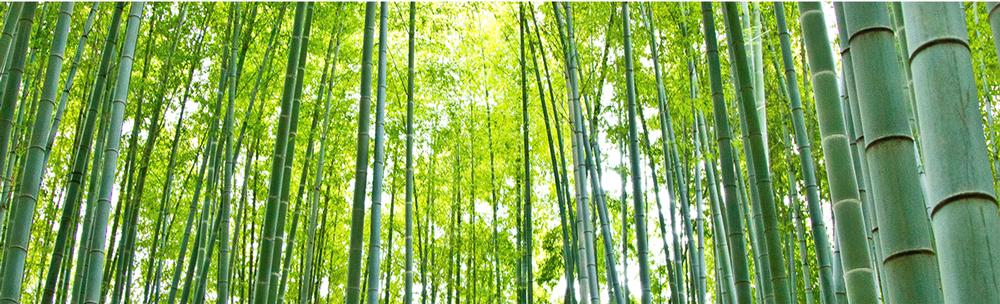 合馬天然水 竹林